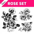 Sketch floral set. Hand drawn illustrations of roses — Stock Vector #43552619