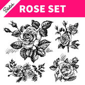 Sketch floral set. Hand drawn illustrations of roses  — Stock Vector