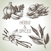 Kitchen herbs and spices. — Stock Vector