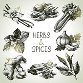 Kitchen herbs and spices — Stock Vector