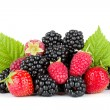 Blackberry, raspberry and strawberry — Stock Photo