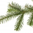 Fir tree branch — Stock Photo #12595170