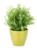 Flor decorativa em vaso — Foto Stock
