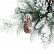 Fir tree branch with cones covered with snow — Stock Photo