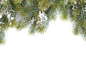 De vertakking van de beslissingsstructuur fir bedekt met sneeuw — Stockfoto