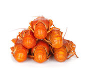 Boiled crayfishes — Stock Photo