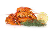 Boiled crayfishes with lemon slice and dill — Stock Photo