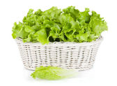 Lettuce in basket — Stock fotografie