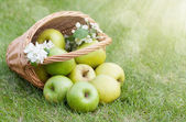 Ripe green apples in basket — Stock Photo
