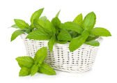 Basket of fresh mint — Stock Photo