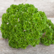Foto de Stock  : Curly parsley