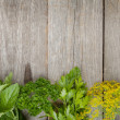 Stock Photo: Herbs selection
