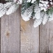 Stock Photo: Fir tree on wooden board
