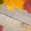 Autumn leaves on wood — Stock Photo #32786871