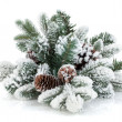 Stock Photo: Fir tree branch with cones