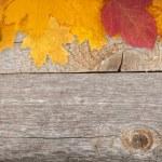 Autumn leaves on wood — Stock Photo