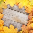 Colorful autumn maple leaves frame — Stock Photo