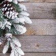 Fir tree on wooden board — Foto Stock
