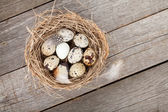 Quail eggs nest — Stockfoto