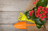 Potted flower and garden utensils — Stock Photo