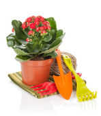 Potted flower and garden utensils — Stock fotografie