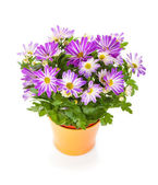 Potted flower — Stock Photo