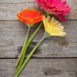 Three colorful gerbera flowers — Stock Photo #48089143