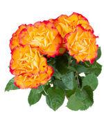 Orange roses bouquet — Stock Photo