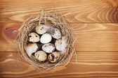 Quail eggs nest — Stock Photo