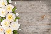 Flores rosas frescas — Foto Stock