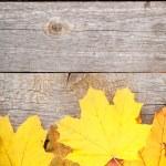Colorful autumn maple leaves — Stock Photo #49581413