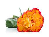 Fiore rosa arancione — Foto Stock
