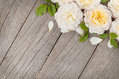 Fresh rose flowers — Stock Photo