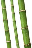 Bamboo stems — Stock Photo