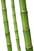 Bamboo stems — Stock Photo