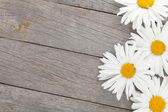 Daisy camomile flowers on wooden background — Stock Photo
