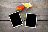 Two colorful gerbera flowers and photo frames — Stock Photo