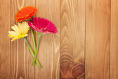 Colorful gerbera flowers — Stock Photo