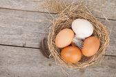 Nest eieren — Stockfoto