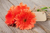Gerbera flowers with tag — Stock Photo