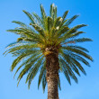 Stock Photo: Green palm tree against blue sky background