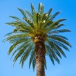 Green palm tree against blue sky background - ストック写真