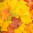 Stock Photo: Beautiful yellow autumn leaves background