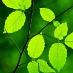 Green foliage in the morning sun beams — Stock Photo #14147831