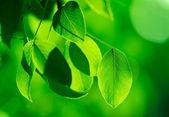 Green foliage in the morning sun beams — Stock Photo