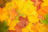 Beautiful yellow autumn leaves background — Stock Photo