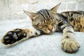 Grey cat sleeping in the street — Stock Photo