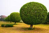 Decorative trees in the park of Lotus Temple, New Delhi, India — Stock Photo