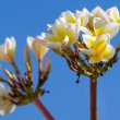 Stock Photo: Small pretty white flowers against blue sky