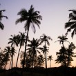 Palm trees silhouette at the sunset, India — Stockfoto